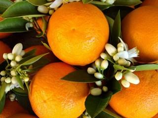 Собирать пазл Сочные апельсины онлайн