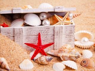 Собирать пазл Сокровища моря онлайн