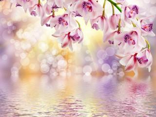Собирать пазл Солнечная орхидея онлайн