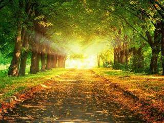 Собирать пазл Солнечный путь онлайн