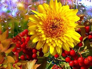 Собирать пазл Солнечный цветок онлайн
