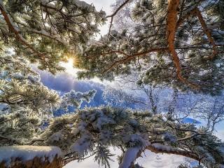Собирать пазл Солнце и снег онлайн