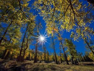 Собирать пазл Солнце в лесу онлайн