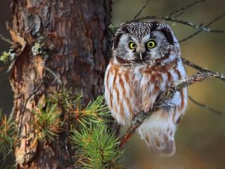 Собирать пазл Сова на дереве онлайн