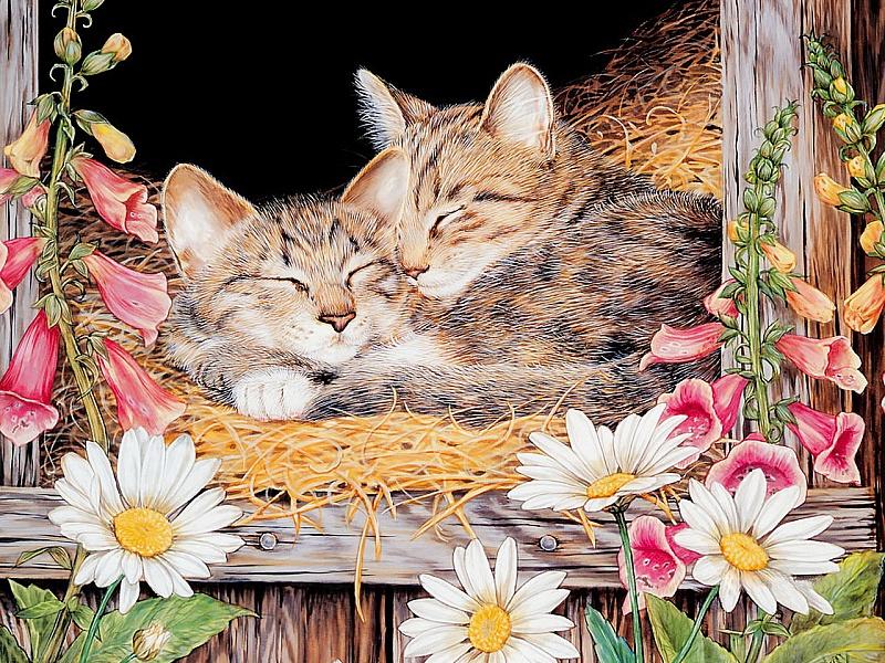 Пазл Собирать пазлы онлайн - Спящие кошки