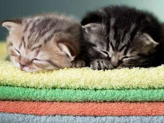 Собирать пазл Спящие котята онлайн