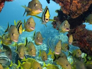 Собирать пазл Стайка рыб онлайн
