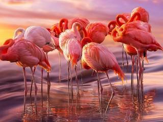 Собирать пазл Стая фламинго онлайн