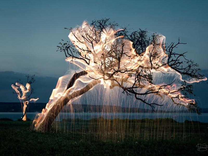 Пазл Собирать пазлы онлайн - Светящиеся деревья