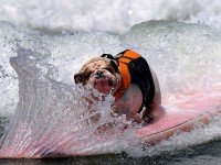 Собирать пазл Сёрфингист онлайн