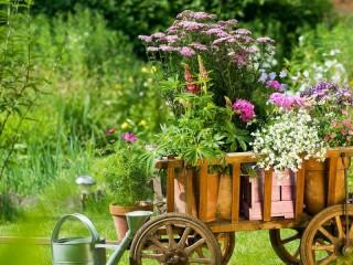 Собирать пазл Тележка с цветами онлайн