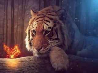 Собирать пазл Тигр и бабочка онлайн