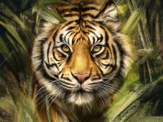 Собирать пазл Тигр в джуглях онлайн
