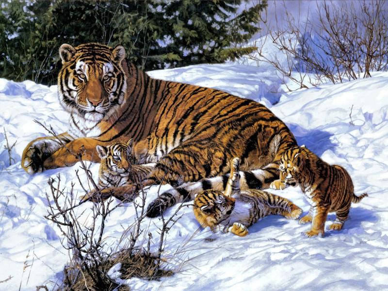 Пазл Собирать пазлы онлайн - Тигрица с детёнышами