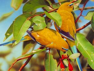 Собирать пазл Травяной попугайчик онлайн