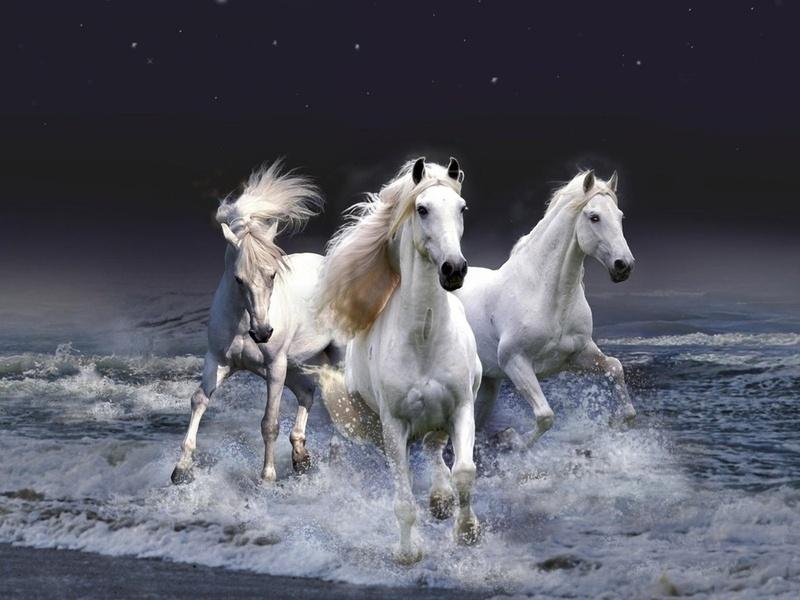 Пазл Собирать пазлы онлайн - Три белых коня