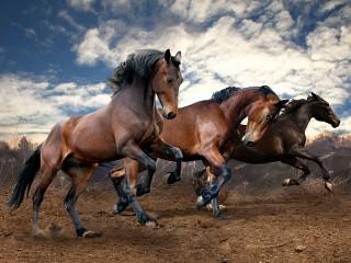 Собирать пазл Три коня онлайн