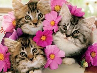 Собирать пазл Три котенка онлайн