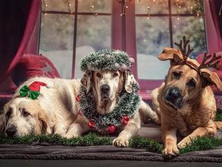 Собирать пазл Три пса онлайн