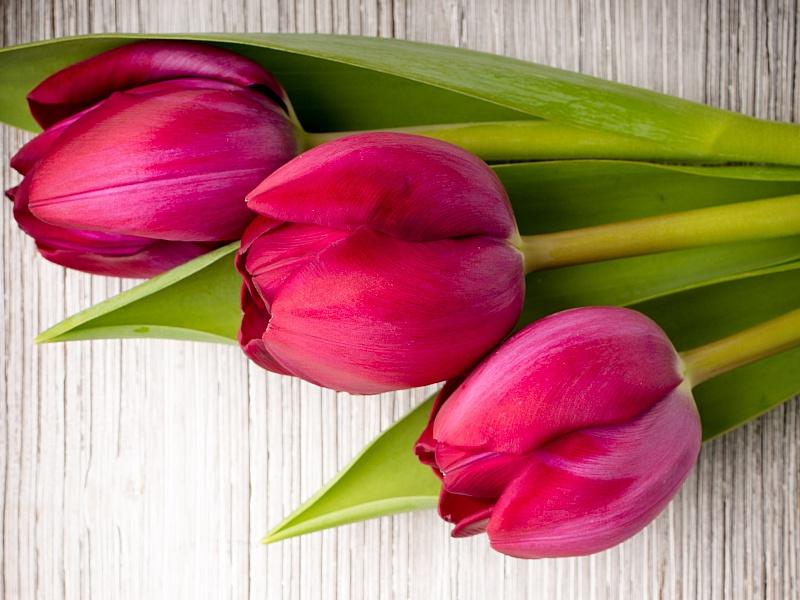 картинка из трех тюльпанов интернет-аукционе