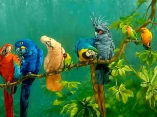 Собирать пазл Тропические попугаи онлайн