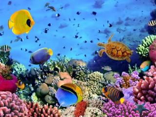 Собирать пазл Тропический риф онлайн
