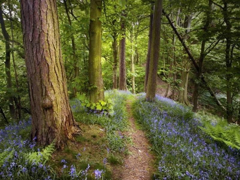Пазл Собирать пазлы онлайн - Тропинка в лесу