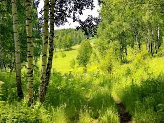 Собирать пазл Тропинка в лесу онлайн