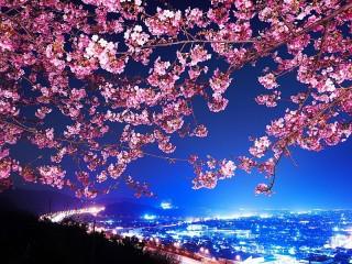 Собирать пазл Цвет ночи онлайн