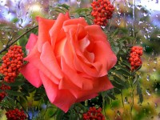 Собирать пазл Цвета рассвета онлайн