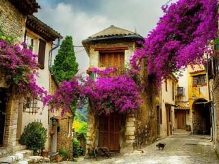 Собирать пазл Цветение на улице онлайн