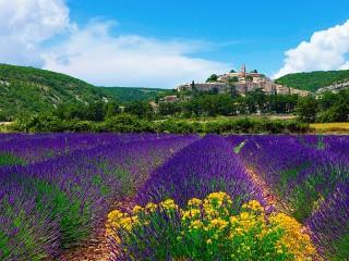 Собирать пазл Цветет лаванда онлайн