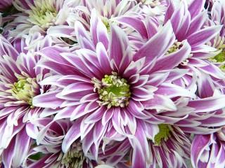 Собирать пазл Цветы онлайн
