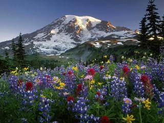 Собирать пазл Цветы Алтая онлайн