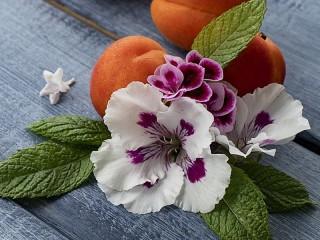 Собирать пазл Цветы и абрикосы онлайн