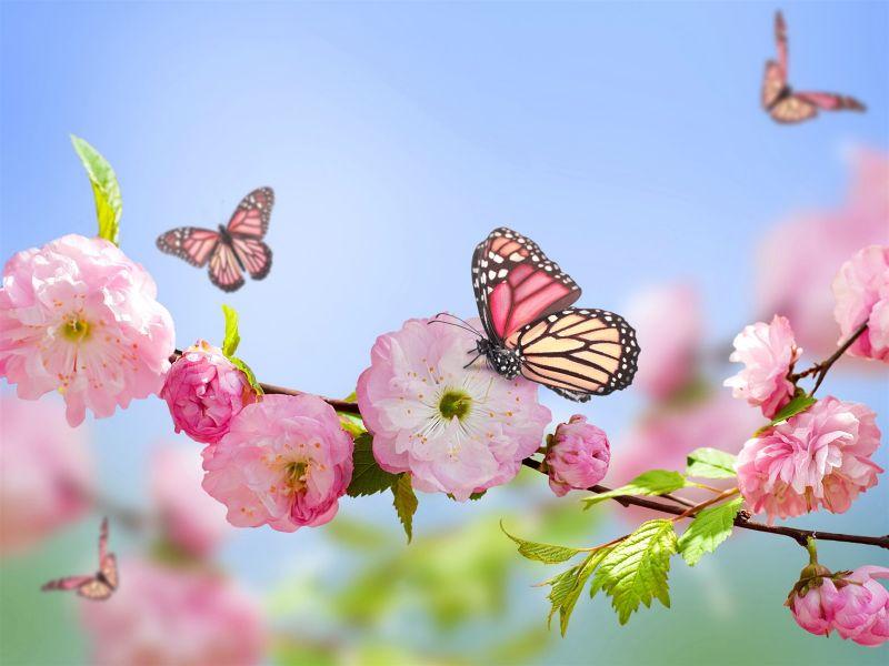 Пазл Собирать пазлы онлайн - Цветы и бабочки