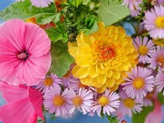Собирать пазл Цветы и листья онлайн