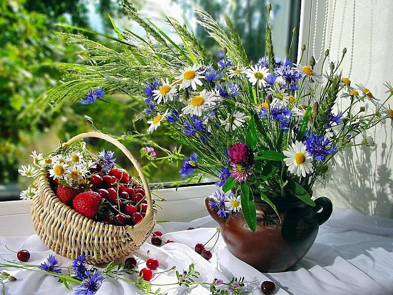 власти отвратить гифка красивые цветы и домашние и полевые фото коллекция троцкий предлагал устроить