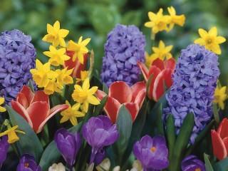 Собирать пазл Цветы к Первомаю онлайн