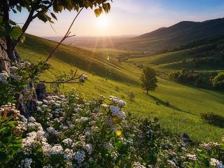 Собирать пазл Цветы на холме онлайн