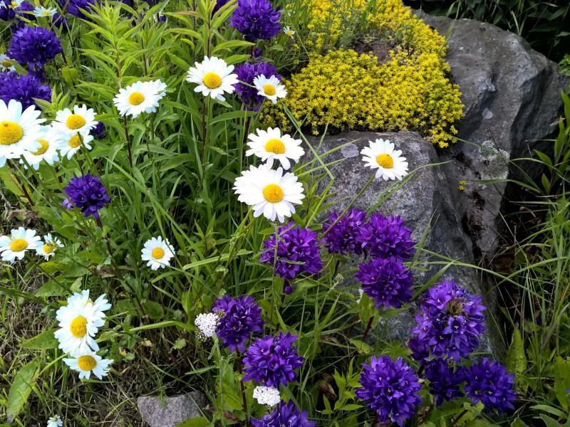 Пазл Собирать пазлы онлайн - Цветы на камнях 1