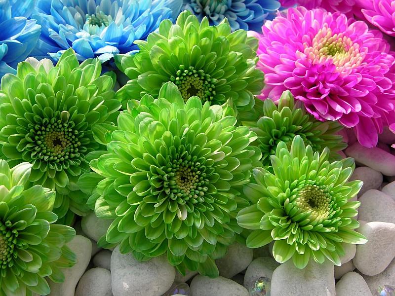 Пазл Собирать пазлы онлайн - Цветы на камнях