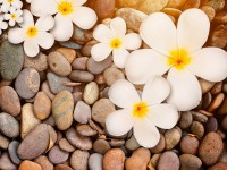 Собирать пазл Цветы на камнях онлайн