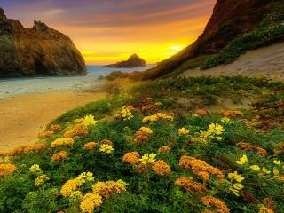 Собирать пазл Цветы на побережье онлайн