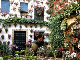 Собирать пазл Цветы на стене онлайн