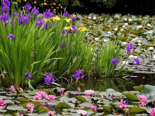 Собирать пазл Цветы на воде онлайн