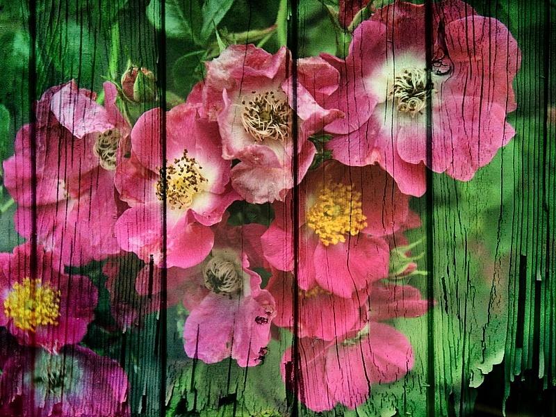 Пазл Собирать пазлы онлайн - Цветы на заборе
