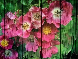 Собирать пазл Цветы на заборе онлайн