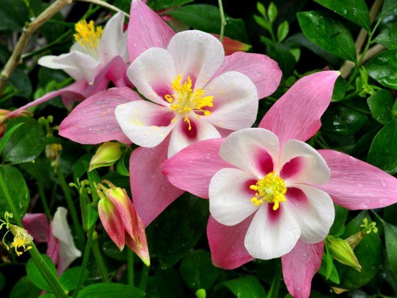 Пазл Собирать пазлы онлайн - Цветы розовые