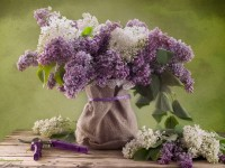 Собирать пазл Цветы сирени онлайн